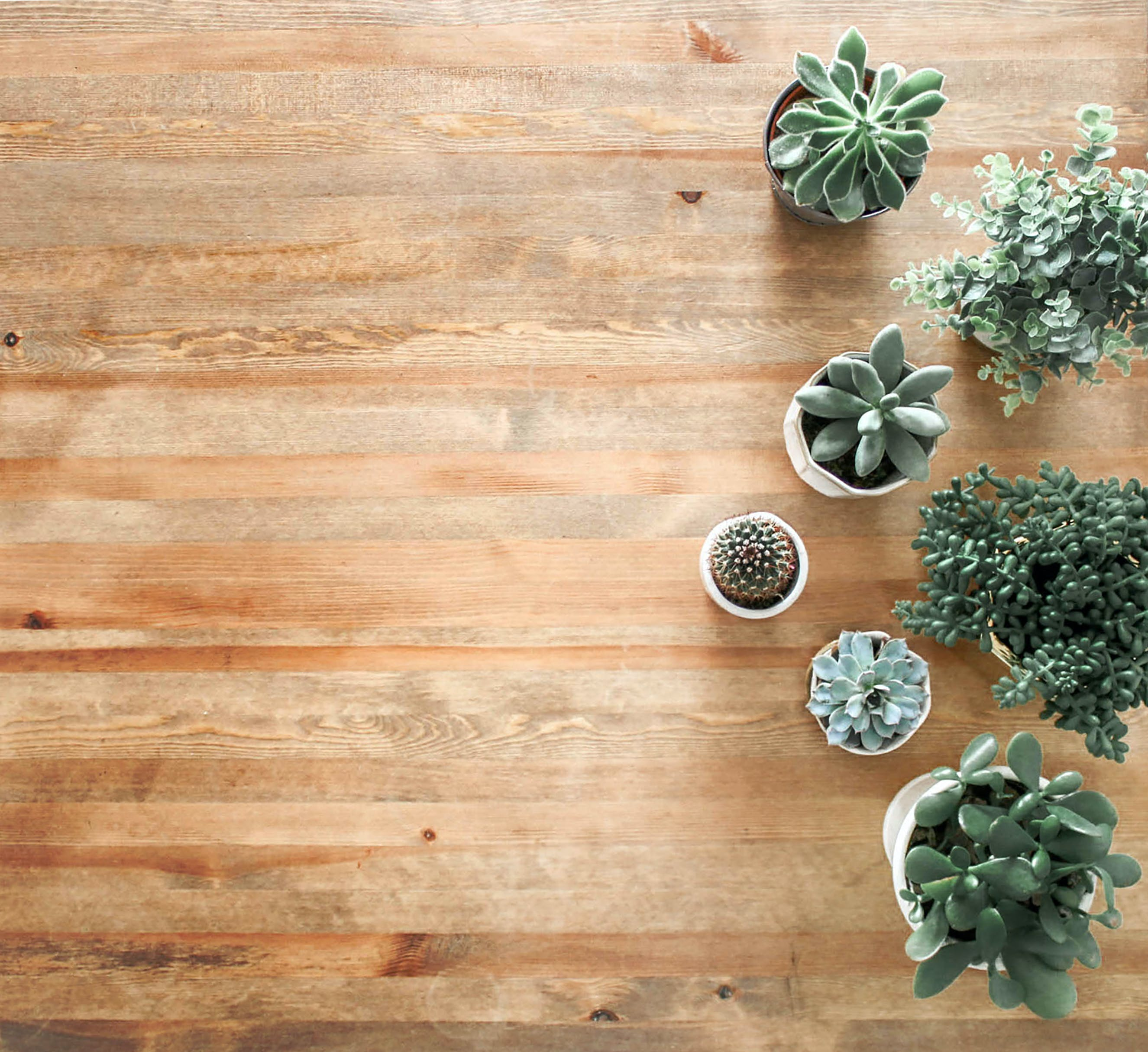 Above Ground Photo of Succulent Plants on Brown Wooden Board