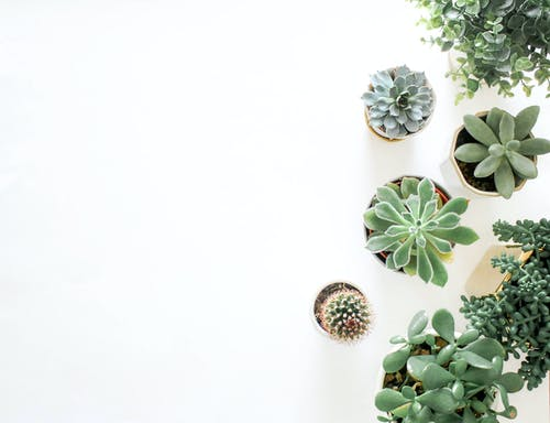 1000+ Engaging Plants Photos · Pexels · Free Stock Photos