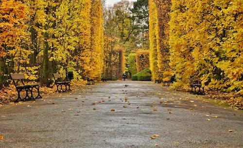 Gratis lagerfoto af humør, natur, park, sæson