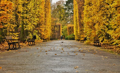Free stock photo of mood, nature, park, season