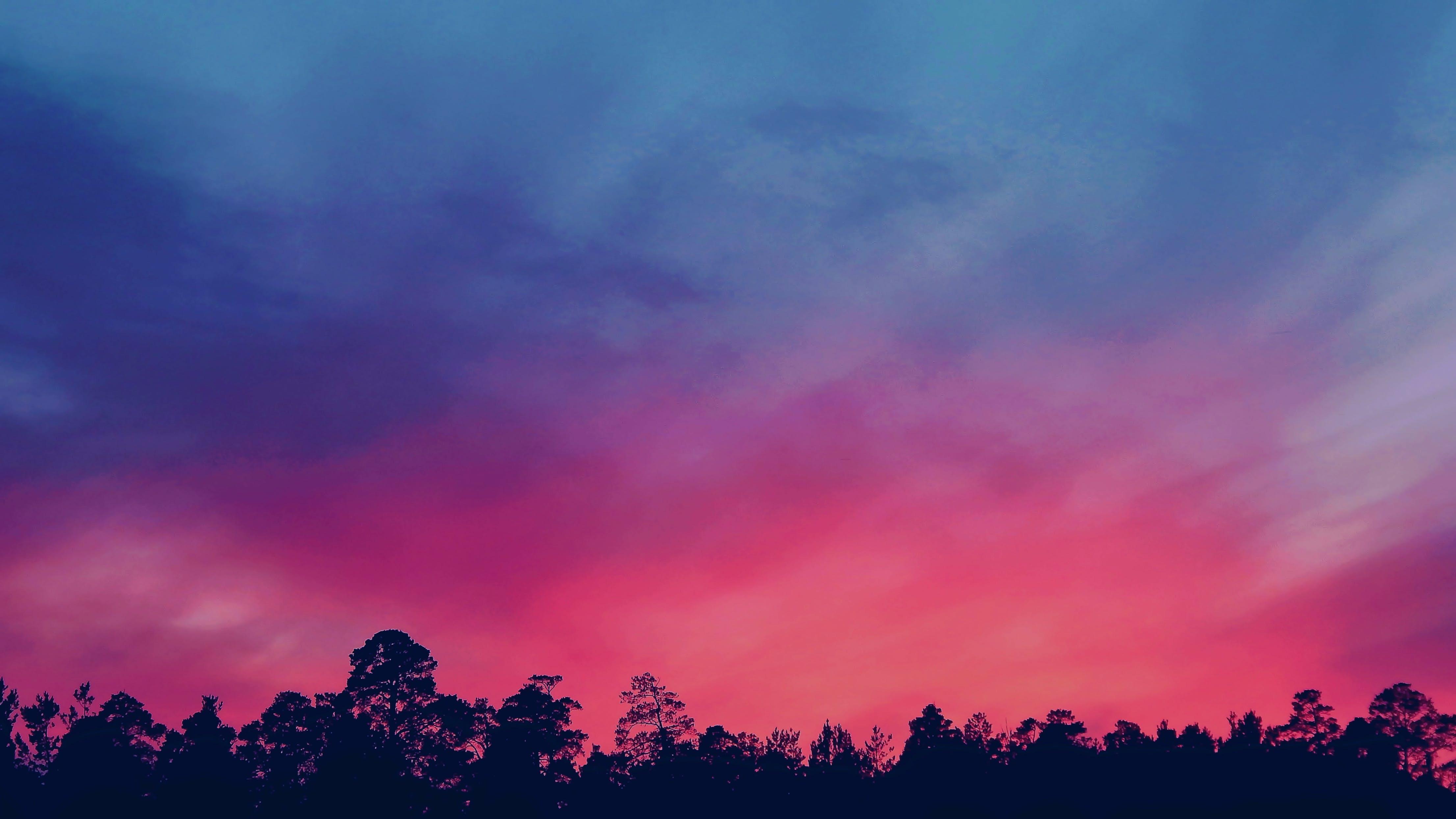 alba, arbres, brillant