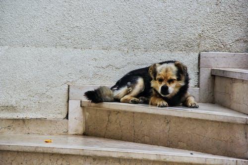 Immagine gratuita di animale, animali domestici, cane, cane di razza
