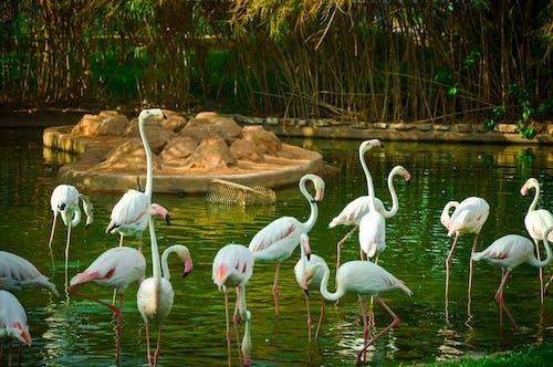 動物園, 天性 的 免費圖庫相片