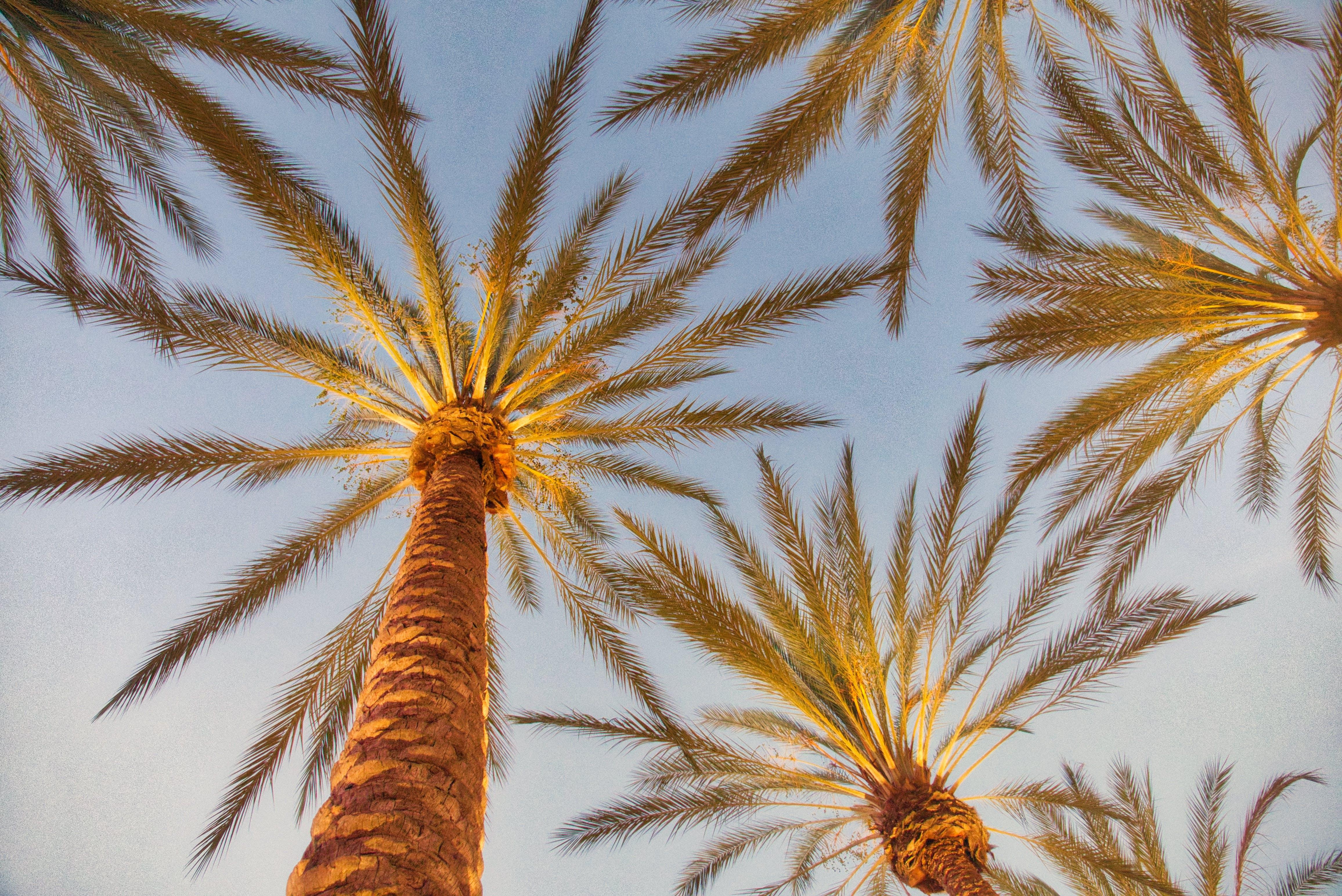 zu aufnahme von unten, bäume, irvine spektrum, perspektive