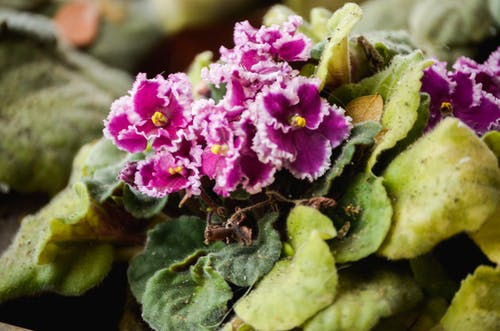 Darmowe zdjęcie z galerii z ekwador, fioletowe kwiaty, fotografia, kwiatowy