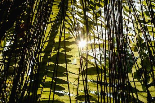 Ingyenes stockfotó ecuador, föld, környezeti, reggeli napfény témában