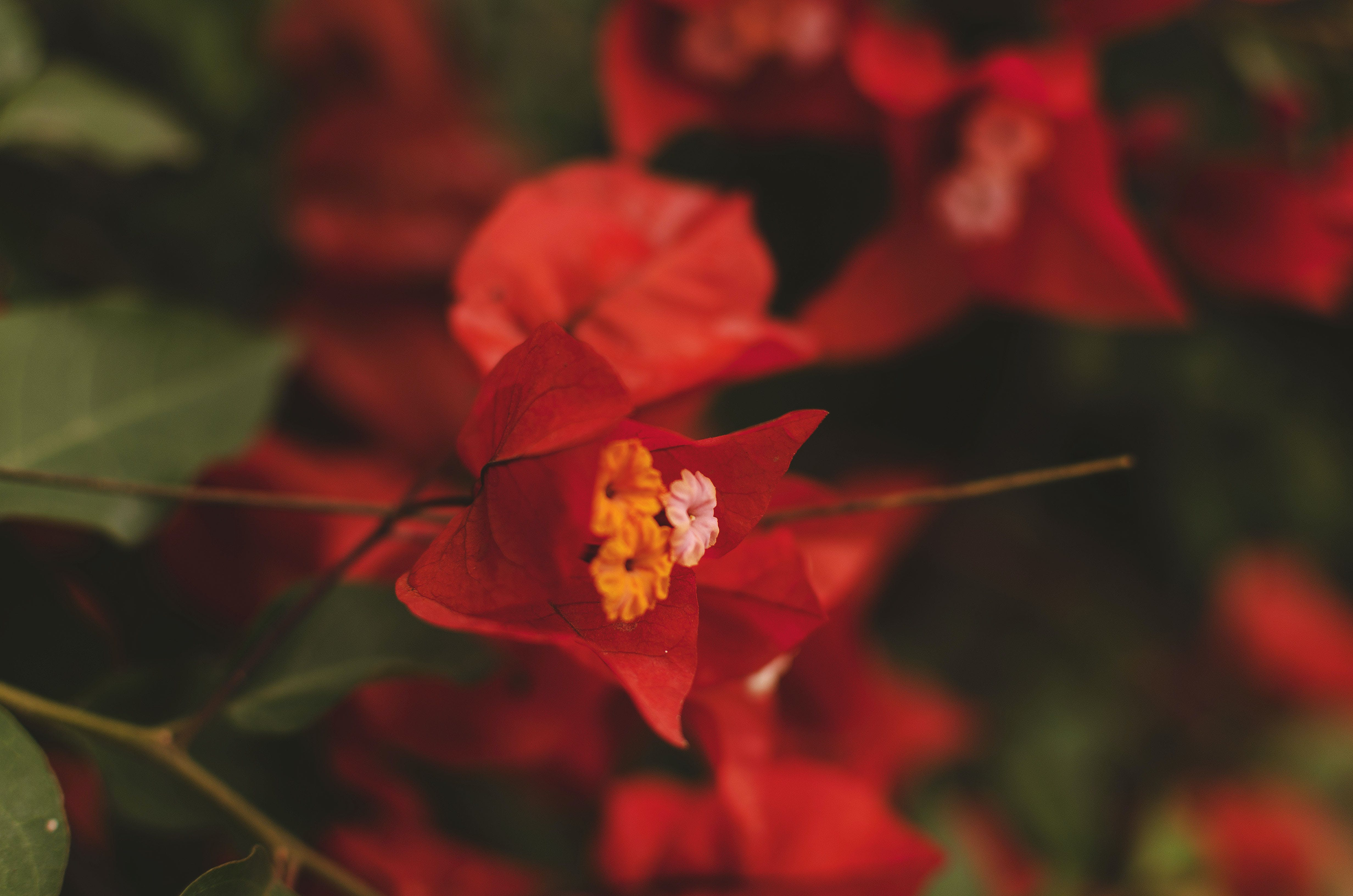 Free stock photo of background, colors, ecuador, flowers
