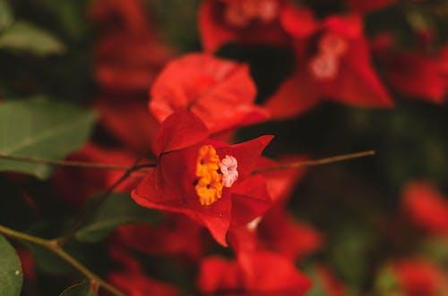 Darmowe zdjęcie z galerii z ekwador, guayaquil, kolory, kwiaty