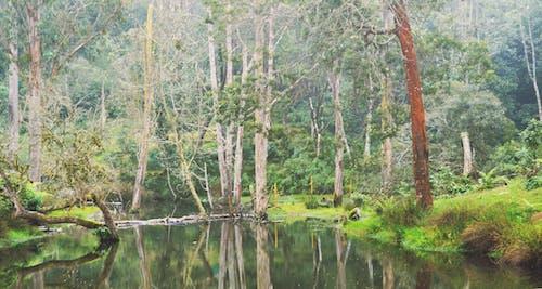 Kostnadsfri bild av cool morgon, grönt gräs, inspiration, naturlig