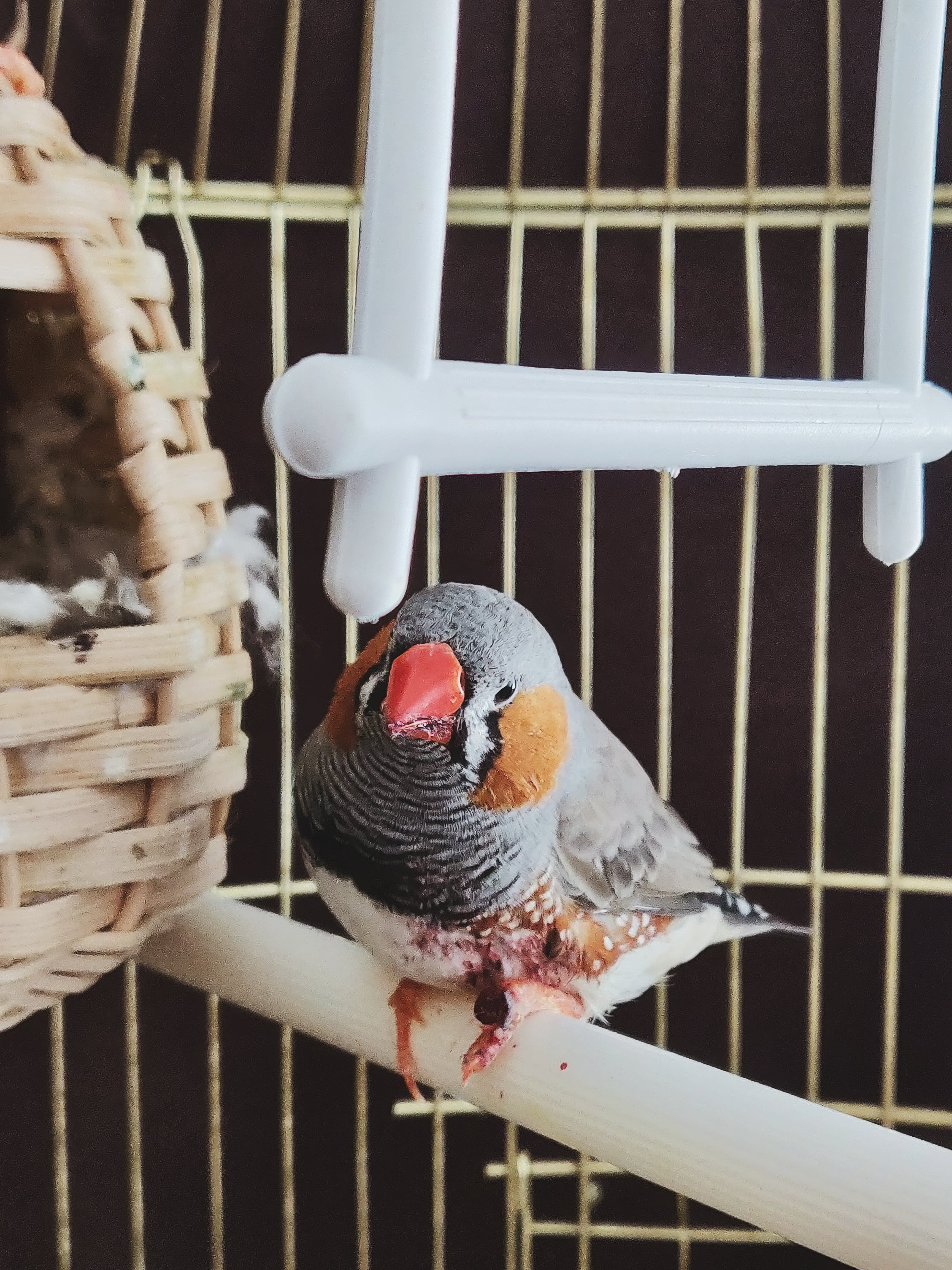 Bird Perched Inside the Cage