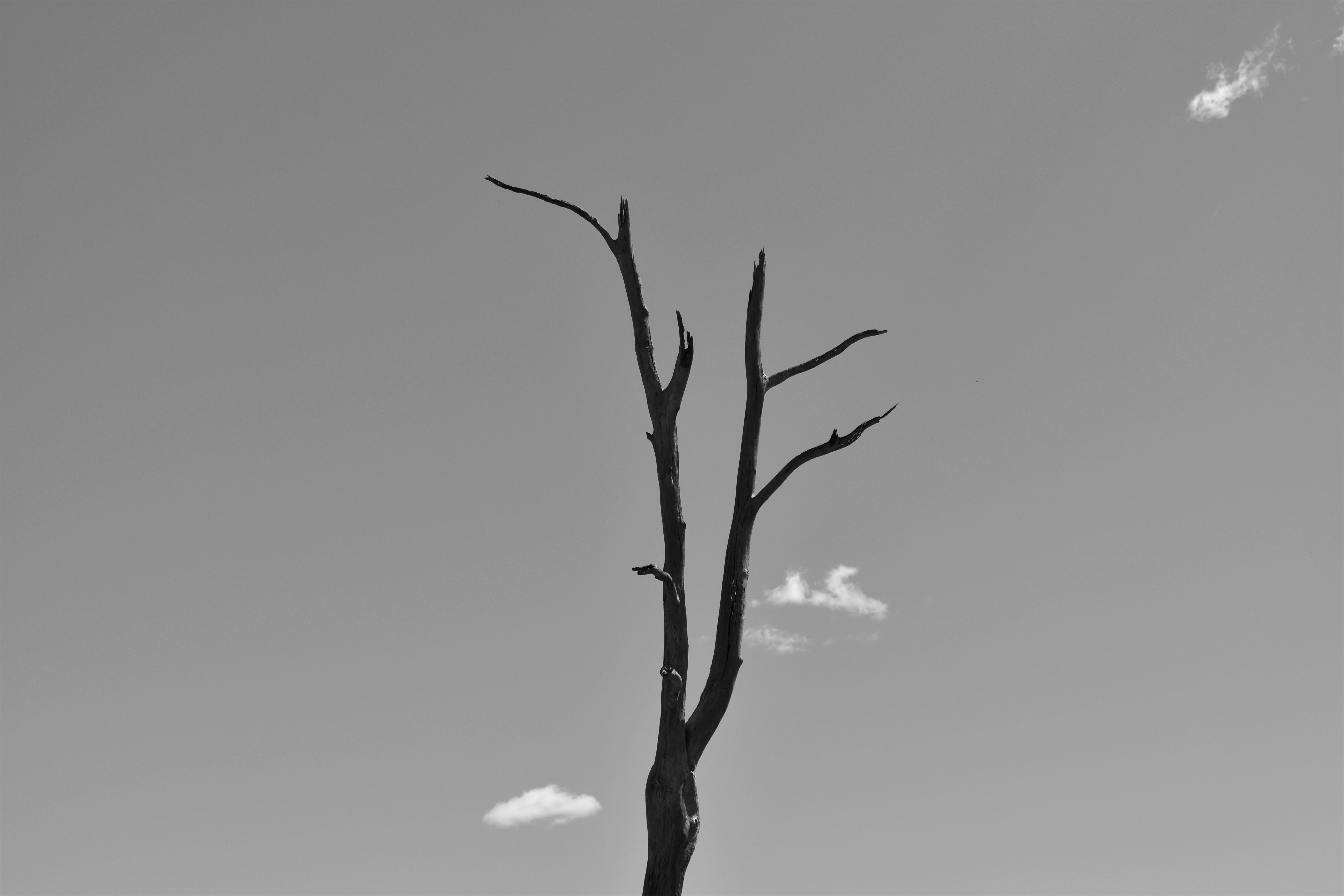 Monochrome Photo of Leafless Tree