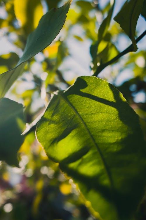 Kostenloses Stock Foto zu blätter, bokeh, flora, fokus