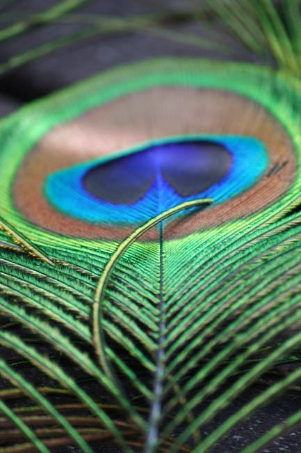 Close up photo of green and brown peacock feather