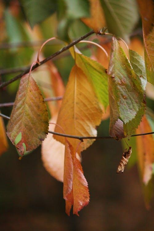 Ilmainen kuvapankkikuva tunnisteilla appelsiini, luonto, oksat, ruskea