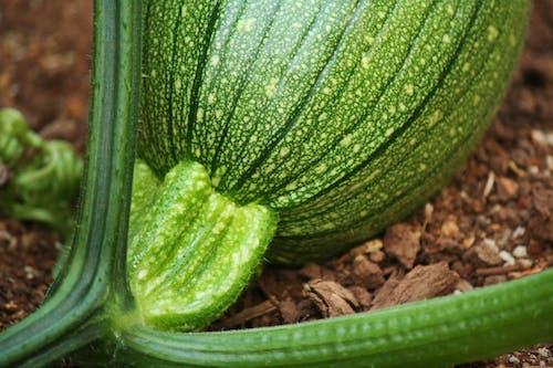 Ilmainen kuvapankkikuva tunnisteilla hedelmäosasto, kasvi, kurpitsa, luonto