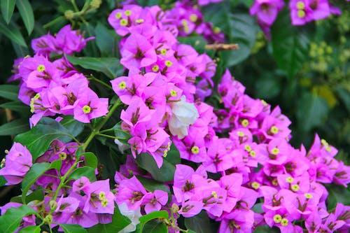 Immagine gratuita di bouquet, colori, crescita, disposizione