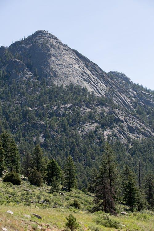 Imagine de stoc gratuită din arbori, aventură, conifer, excursie