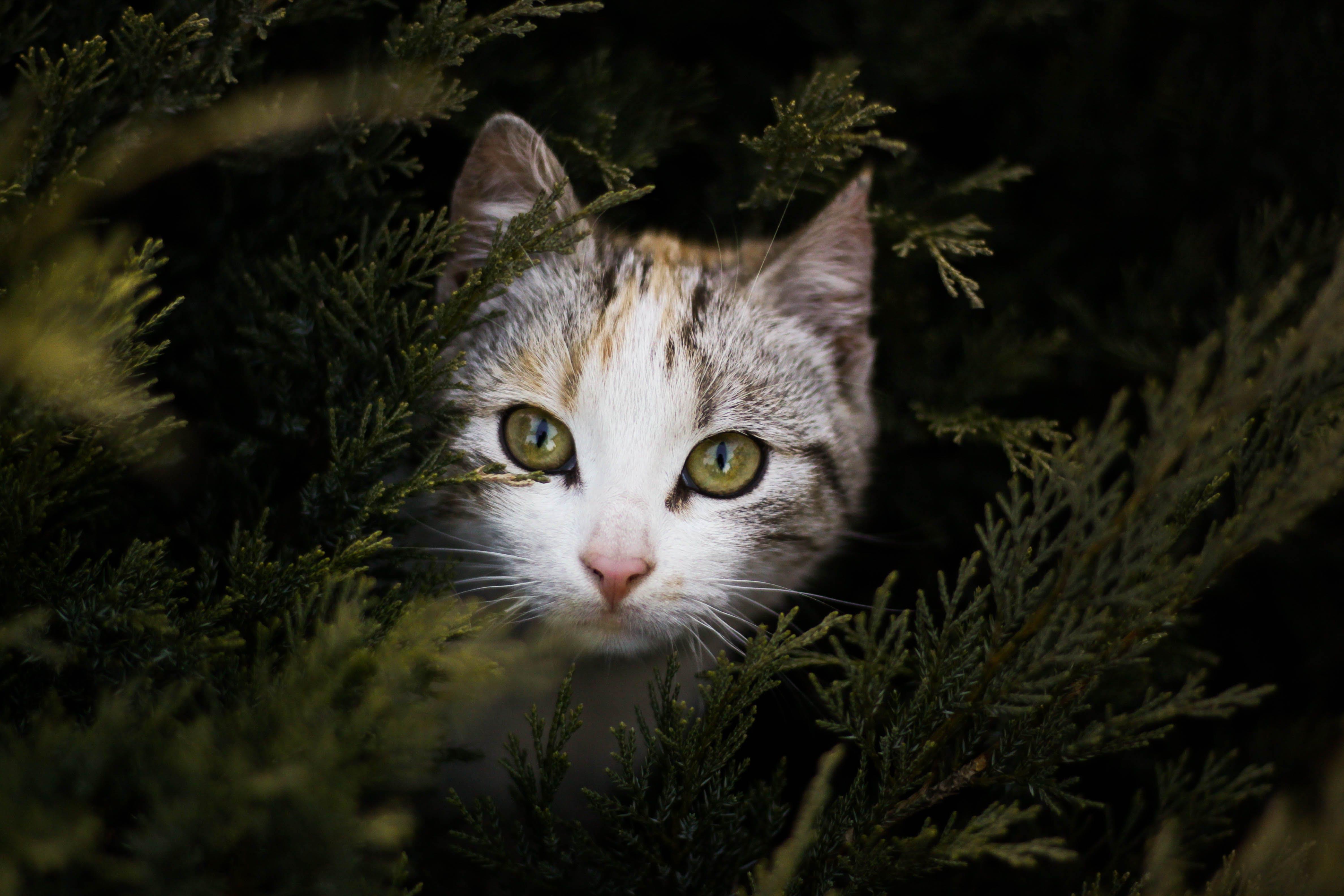 Focus Photography of Gray Orange and Black Kitten Beside Green Plant