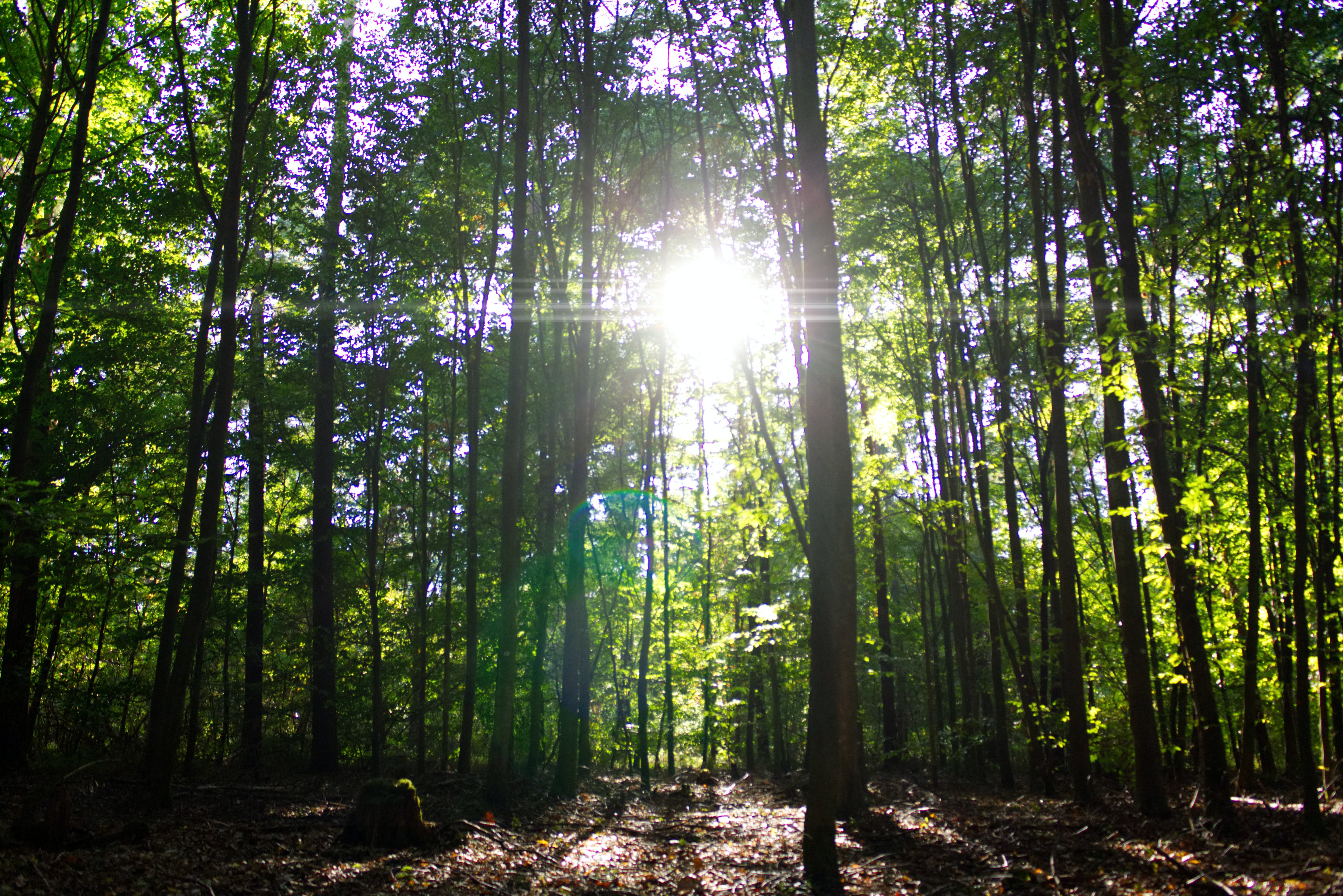 Free stock photo of evening sun, forest, green, lens flare