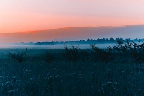 Foto d'estoc gratuïta de alba, amb boira, boira, calma