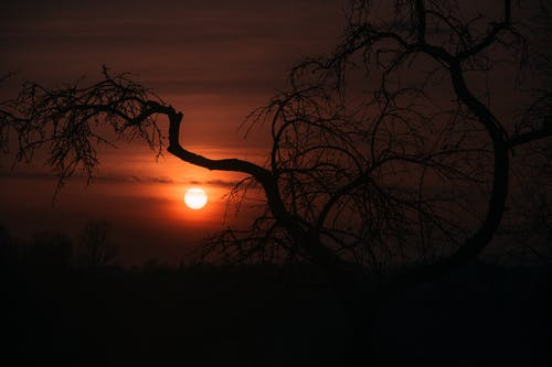 Silhouette Of Leafless Tree