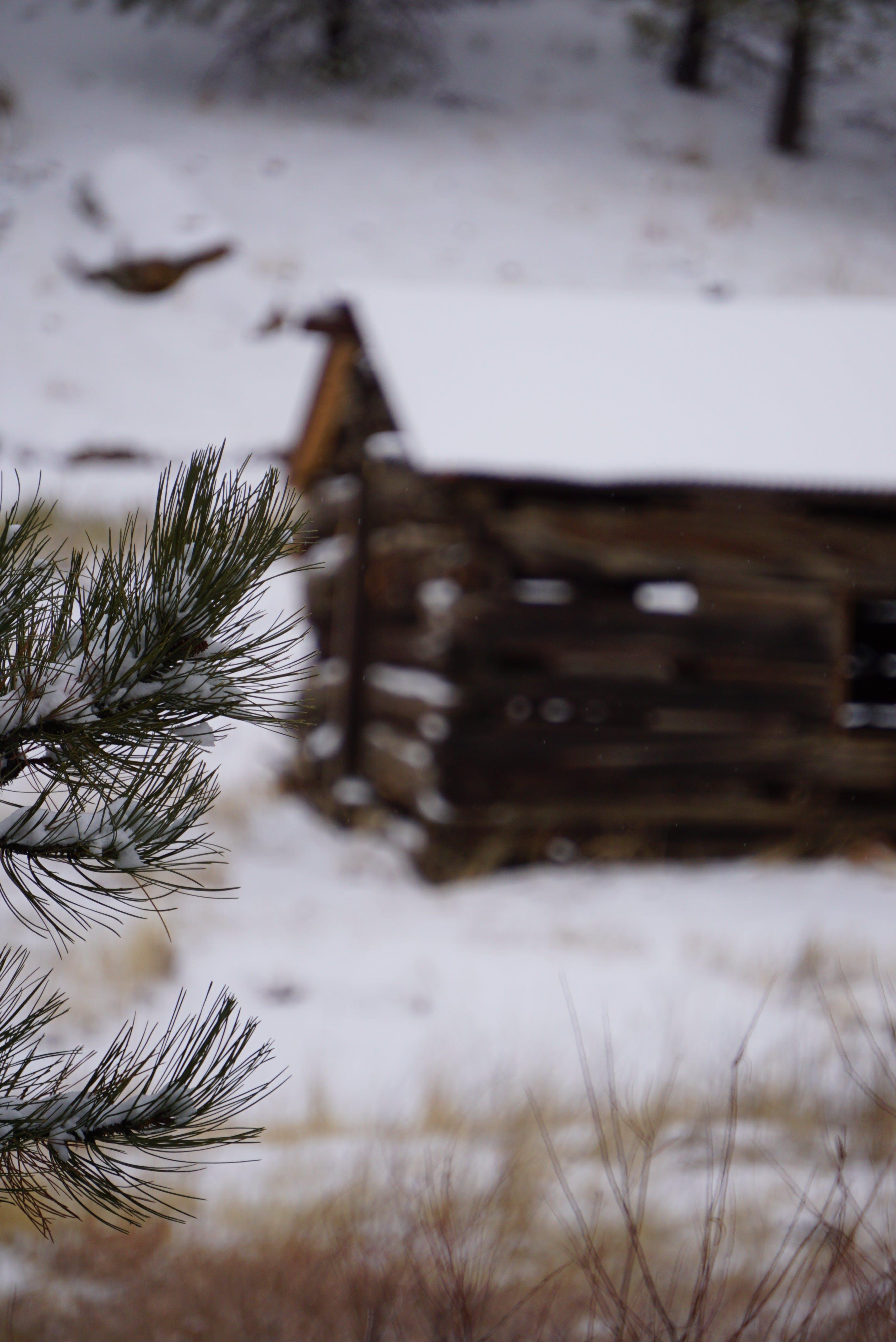 Darmowe zdjęcie z galerii z burza śnieżna, chatka, drewno, drzewo