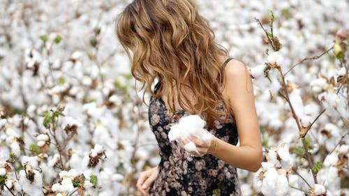 Darmowe zdjęcie z galerii z bawełna, delikatny, dziewczyna, flora