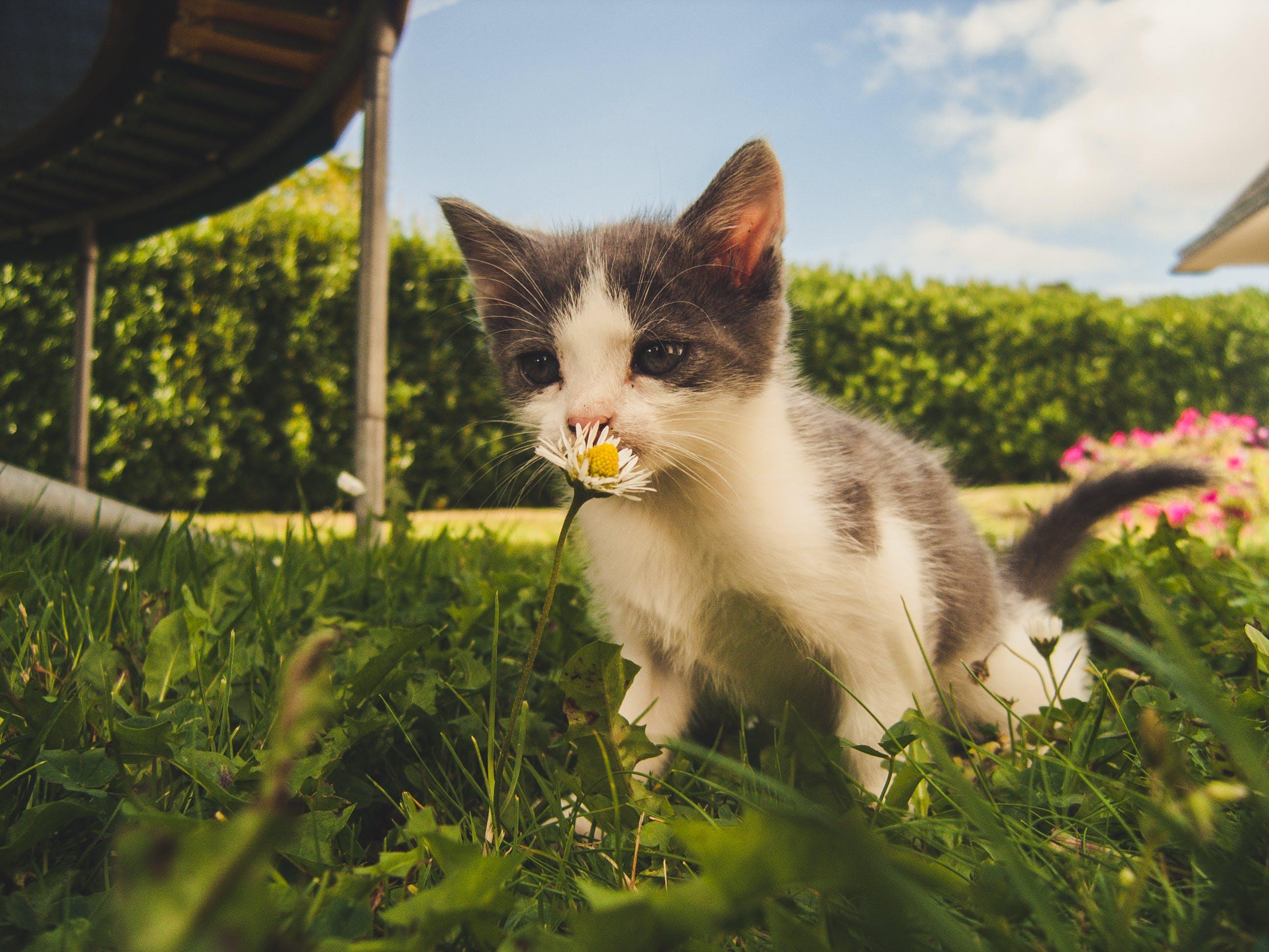 Ảnh lưu trữ miễn phí về cận cảnh, Chân dung, cỏ, con mèo