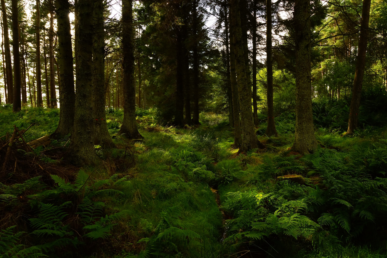 가벼운, 경치, 경치가 좋은, 공원의 무료 스톡 사진