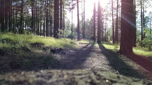Green Grass Near Trees Facing the Sunlight