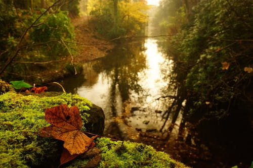 Brown Maple Leaf on Rock Near Stream