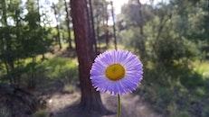 trees, petals, flower
