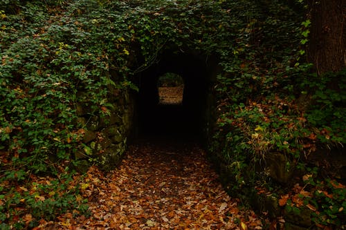 Concrete Tunnel in Forest