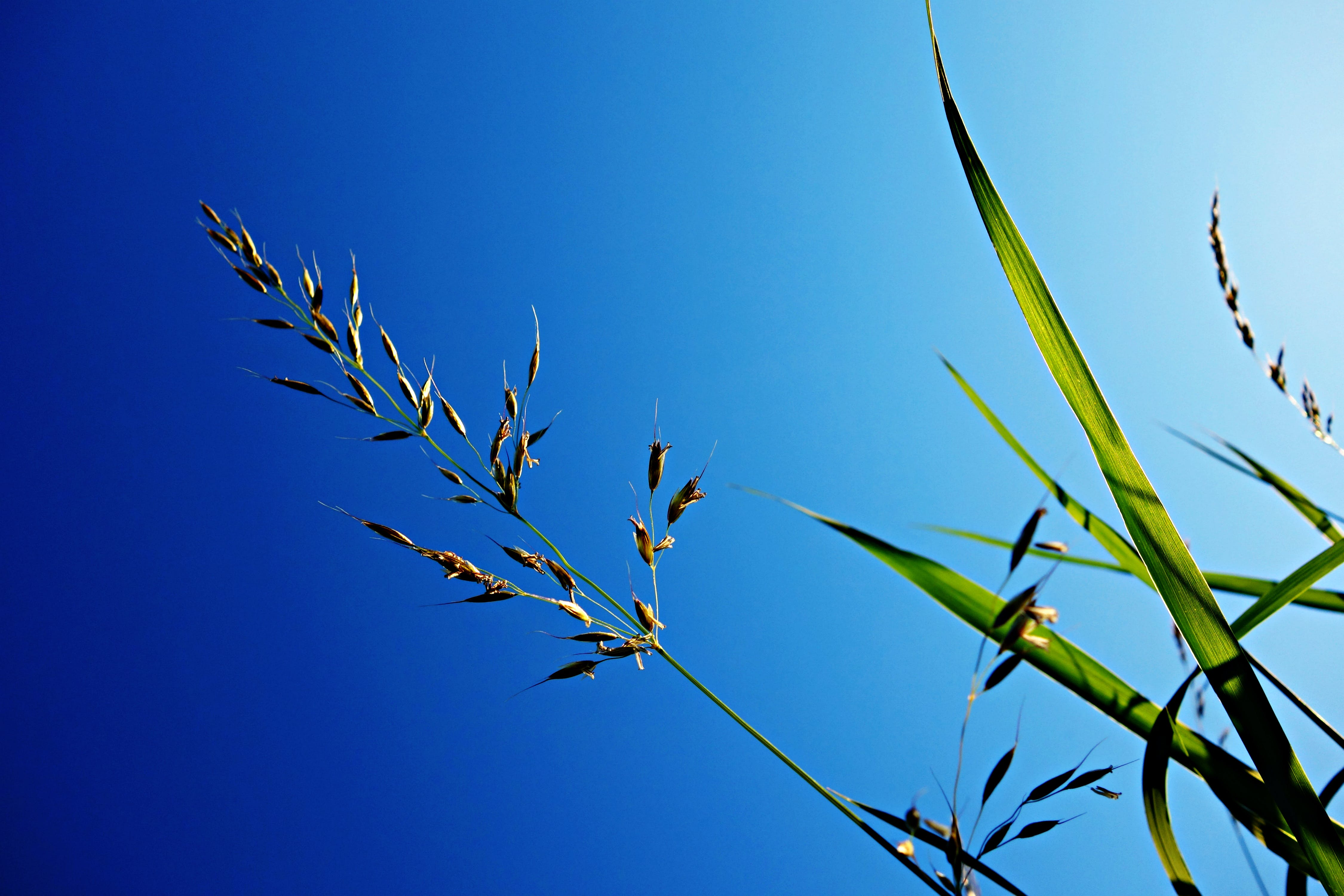 Free stock photo of nature, sky, blue, grass