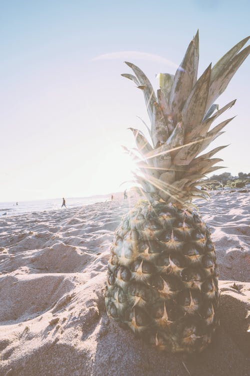 Photos gratuites de ananas, bord de mer, fruit, fruit tropical