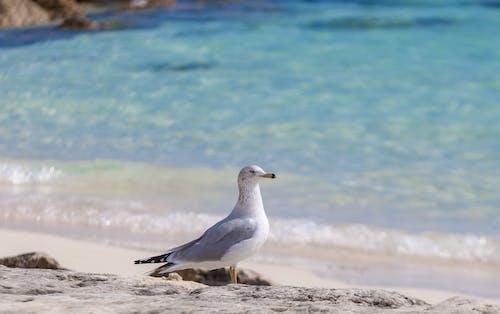 Gratis lagerfoto af hav, måge, sand