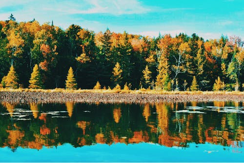 Ilmainen kuvapankkikuva tunnisteilla heijastus, luonto, maisema, puut