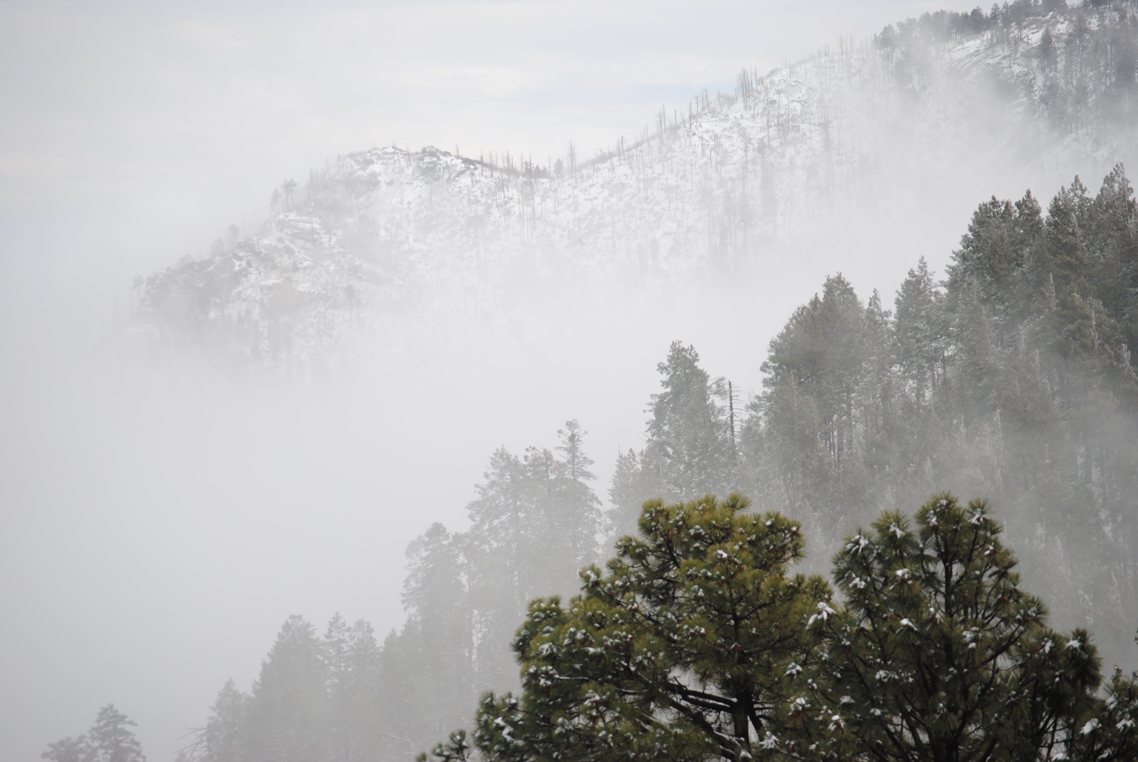 コールド, シーズン, ミスト, 冬の無料の写真素材
