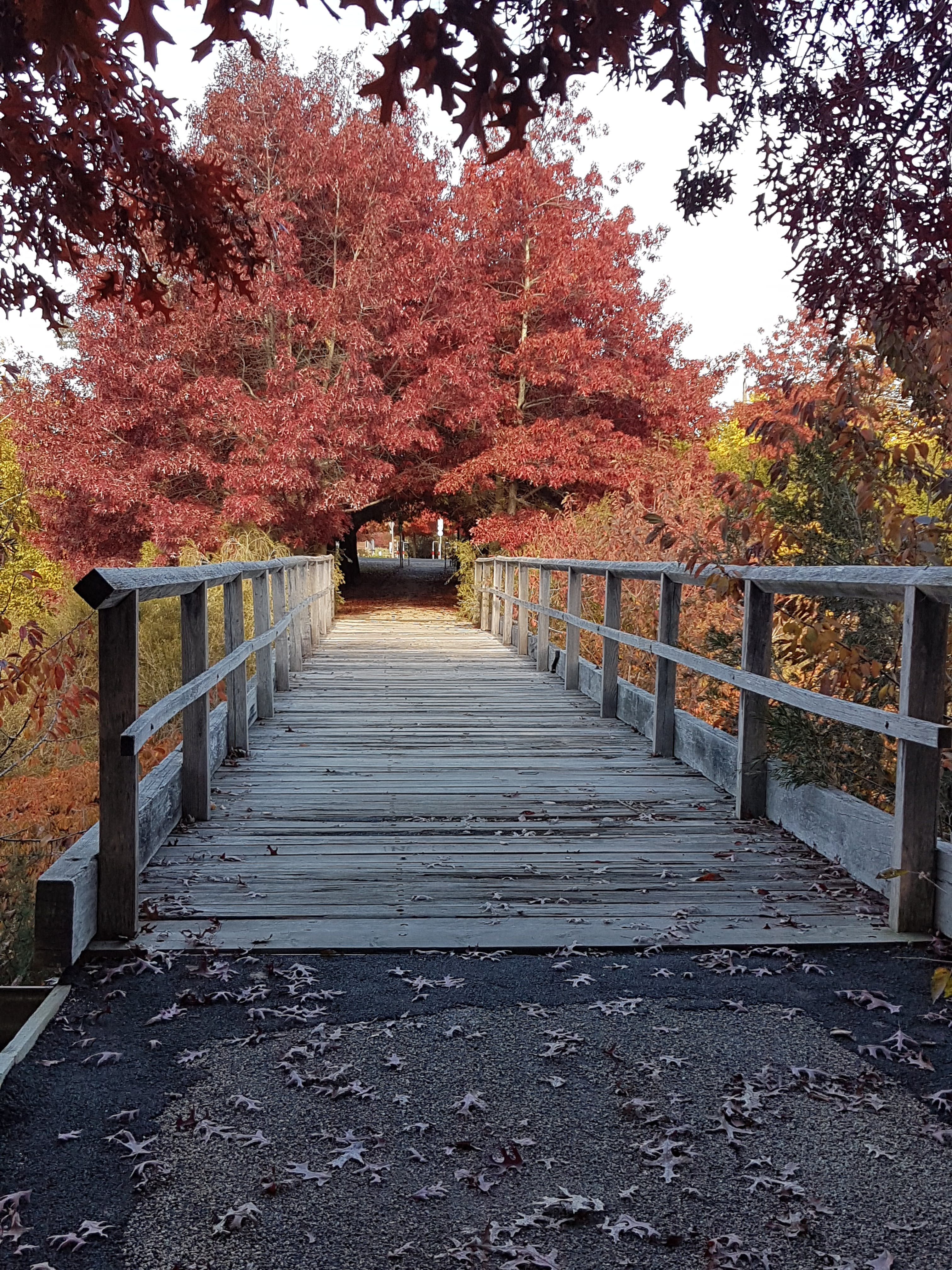 Free stock photo of autumn, bridge, park, trees
