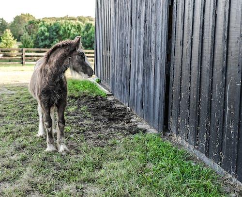 Foto profissional grátis de animal, área, cavalo, celeiro