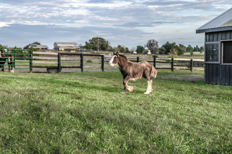 가축, 갈기, 건초지, 경치의 무료 스톡 사진
