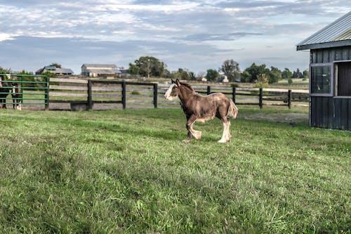 Photos gratuites de agriculture, animal, barrière, campagne