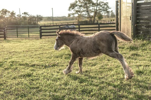 Brown Foal Running on Green Grass