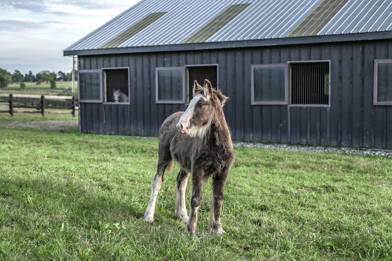 Horse Standing on Green Grass Field