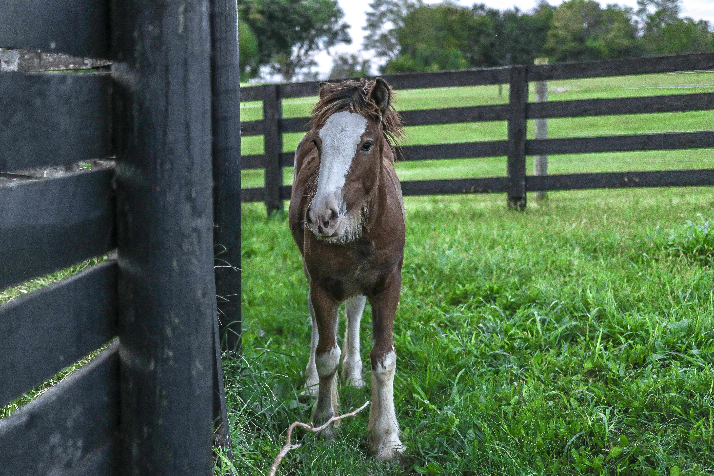 Foto stok gratis Anak kuda, bidang, binatang, hayfield