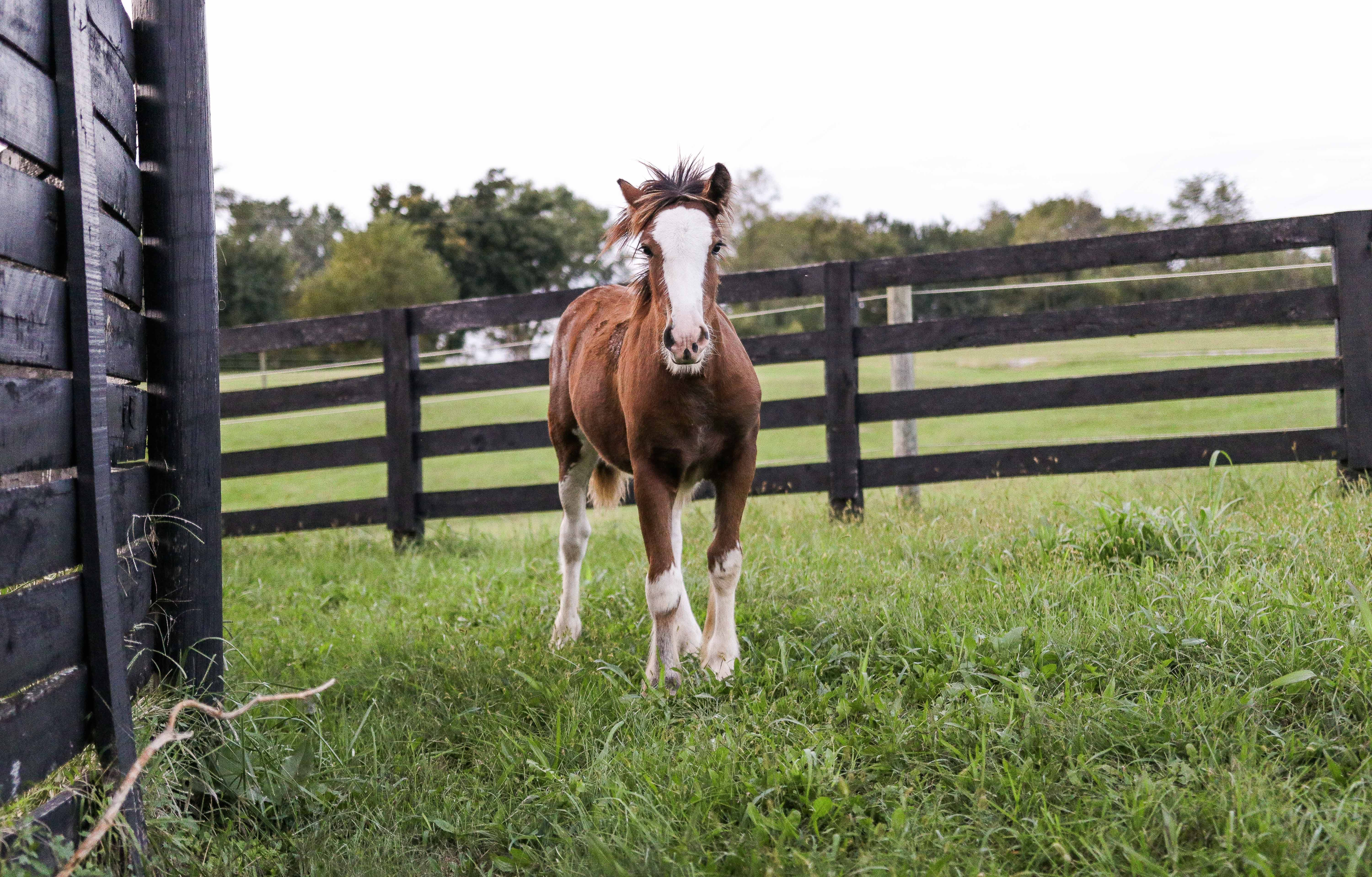 Brown and White Horse Standing on Green Grass