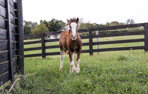 乾草地, 動物, 哺乳動物, 围栏 的 免费素材照片