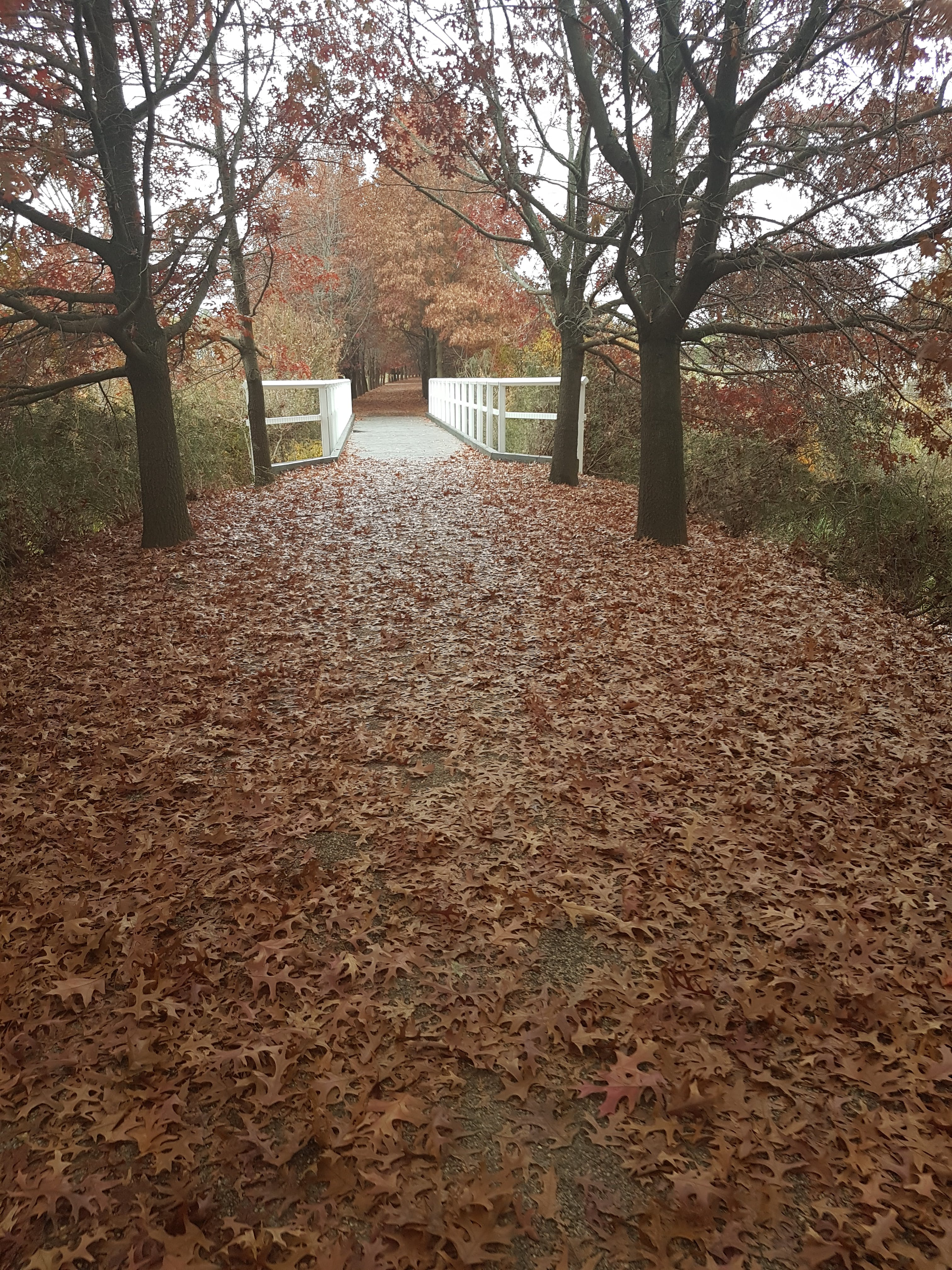 Free stock photo of autumn colours, autumn leaves, bridge, leaves