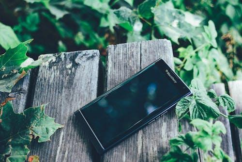 Immagine gratuita di ambiente, blackberry, colori, crescita