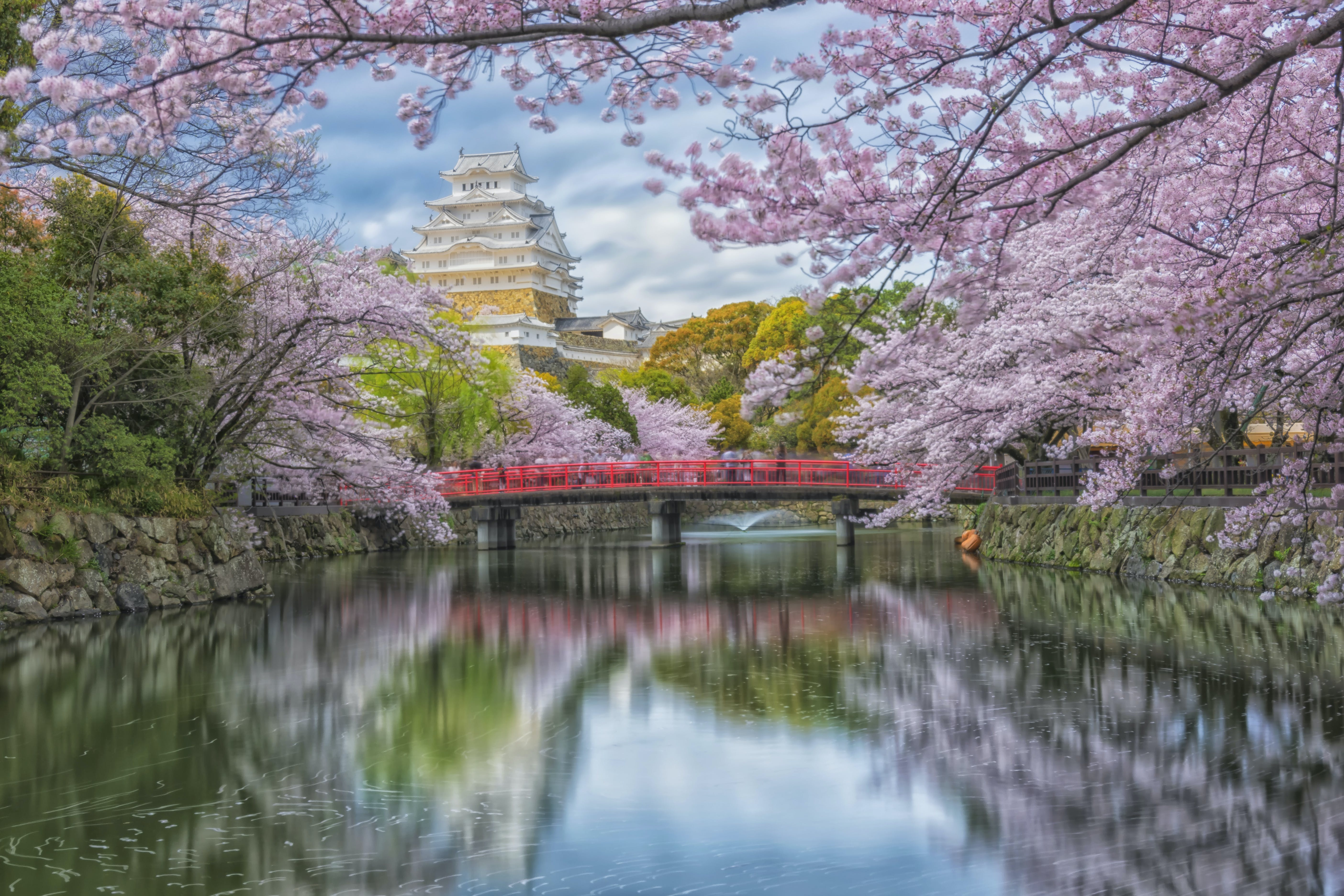 Free stock photo of beauty, castle, cherry blossom, cherry blossoms